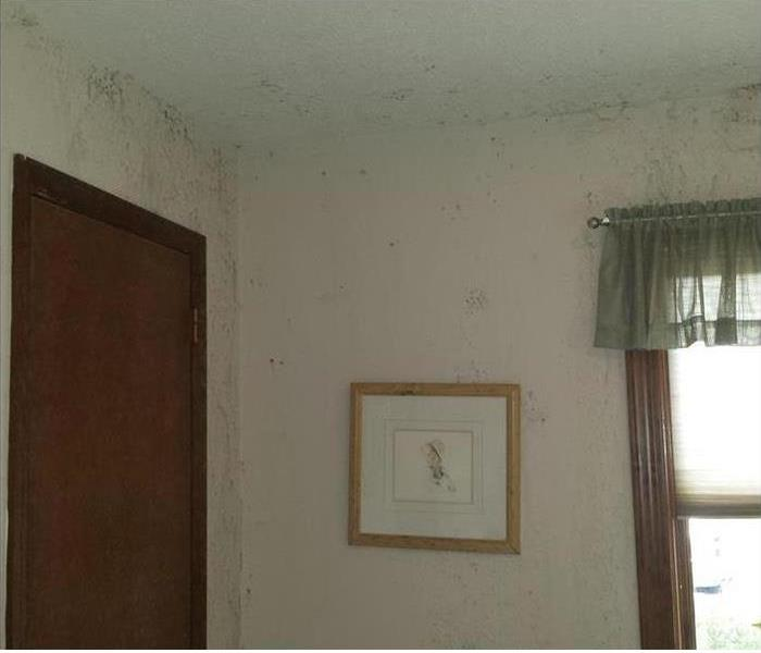 Mold Remediation Mooresville Residents:  Follow These Mold Safety Tips if You Suspect Mold