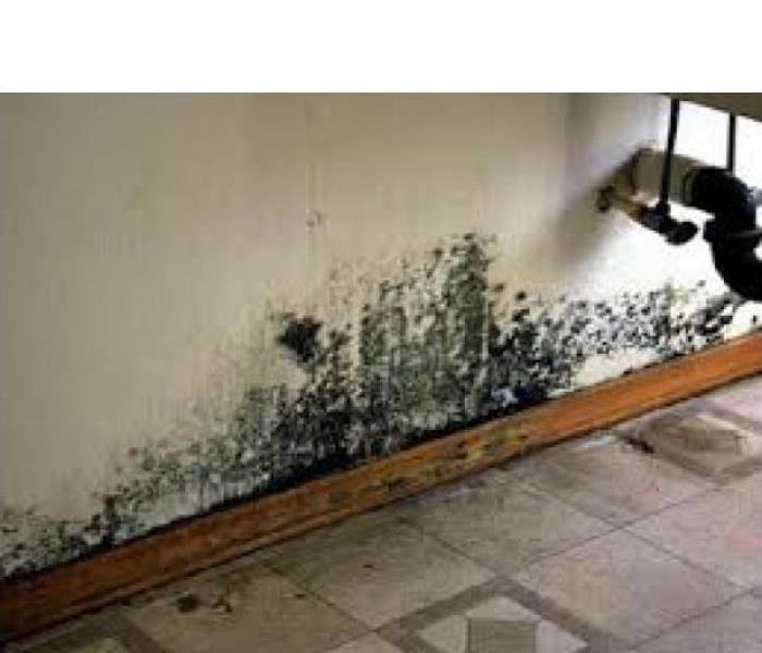 Mold Remediation Secondary Damage can occur after water damage